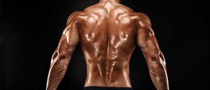 Close up image of back muscles