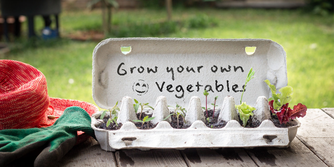 Growing Your Own Foods At Home