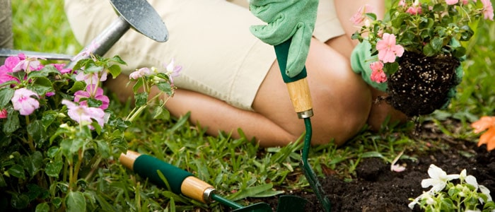 person knelt digging holes in soil and planting flowers